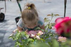 Tallahassee Nurseries-5