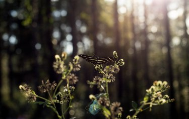 Butterflies & Sunsets - Jacque Holmes Photography (1)