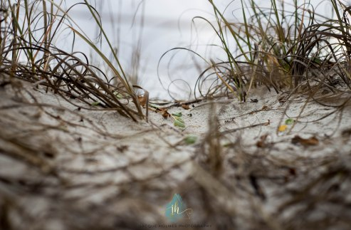 Cold Days at the Beach - Jacque Holmes Photography 2018 (4)