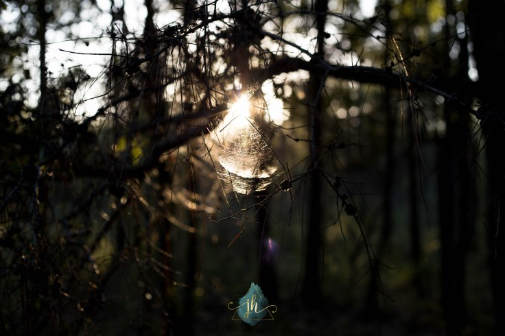 Finding Light - Jacque Holmes Photography (1)