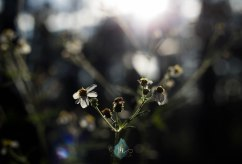 Finding Light - Jacque Holmes Photography (2)