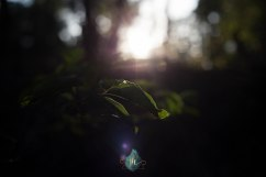 Finding Light - Jacque Holmes Photography (4)