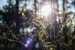 flare for Days - Jacque Holmes Photography (1)