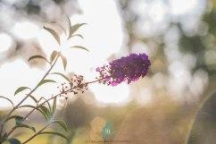 In the Garden - Jacque Holmes Photography (1)