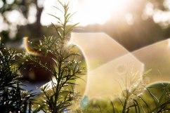 In the Garden - Jacque Holmes Photography (2)