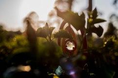 In the Garden - Jacque Holmes Photography (5)