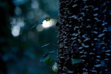 Twilight & Sunset - Jacque Holmes Photography (2)